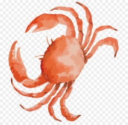 Seafood Background clipart - Crab, Drawing, Fish ...