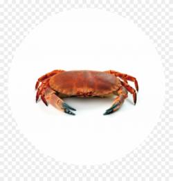 Crab Meat - Crab Raccoon Clipart (#3866205) - PinClipart