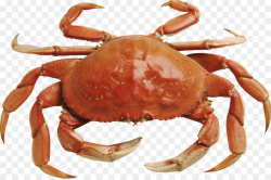 Seafood Background clipart - Crab, Food, transparent clip art