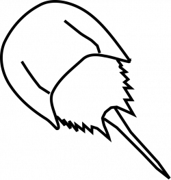 Horseshoe Crab Clipart