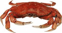 red crab standing png - Free PNG Images | TOPpng