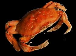 Free Crab PNG Transparent Images, Download Free Clip Art ...