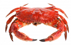 Red Crab Standing PNG Image - PurePNG | Free transparent CC0 PNG ...