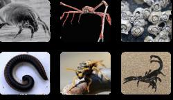 11. 10: Arthropods - Biology LibreTexts