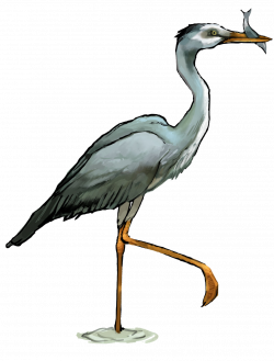 28+ Collection of Heron Clipart Free | High quality, free cliparts ...