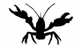 Crawfish clip art black and white - ClipartFest | Clipart ...