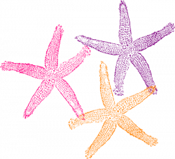 Starfish Clip Art at Clker.com - vector clip art online, royalty ...