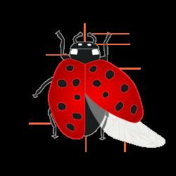 Forensic entomology - Wikipedia