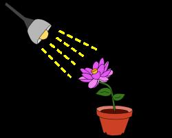 Phototropism - Wikipedia