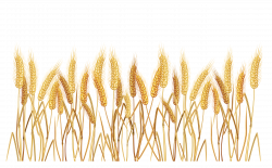 28+ Collection of Wheat Field Clipart Png | High quality, free ...