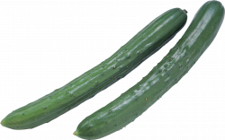 Cucumber PNG images free download
