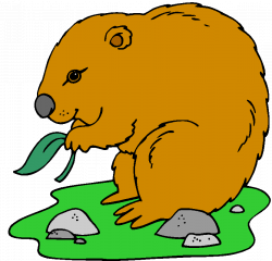 Woodchuck Clipart Group (69+)