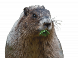 Can That Cute Groundhog Really Cause Damage? | Bobbex
