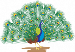 28+ Collection of Peacock Clipart Png   High quality, free cliparts ...