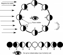 Free Moon Phases Cliparts, Download Free Clip Art, Free Clip Art on ...