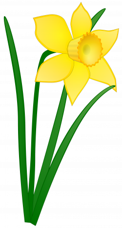 Daffodil Flower Clip Art Clipart Panda Free Clipart Images   Clipart ...