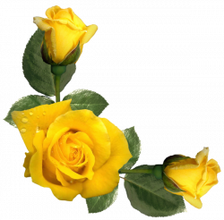 Beautiful Yellow Roses Decor PNG Image | FLOWERS | Pinterest ...