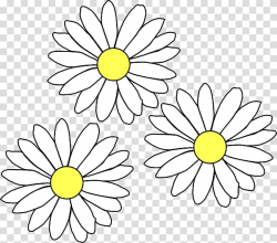 Common daisy , daisies transparent background PNG clipart ...