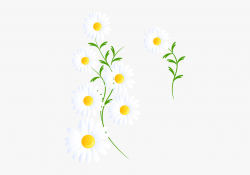 white #daisy #daisies #flower #flowers #floral #spring ...