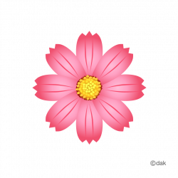 Cosmos Flower|Pictures of clipart and graphic design and #2130 ...
