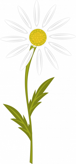 Daisy clipart camomile ~ Frames ~ Illustrations ~ HD images ~ Photo ...