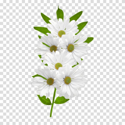 White flowers in bloom, Flower Common daisy , White Daisies ...