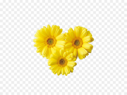 Bright Flower Png & Free Bright Flower.png Transparent ...