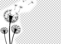 Common Dandelion Stock Photography PNG, Clipart, Artwork ...