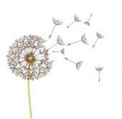 Free Dandelion Cliparts, Download Free Clip Art, Free Clip ...