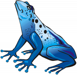 28+ Collection of Dart Frog Clipart   High quality, free cliparts ...
