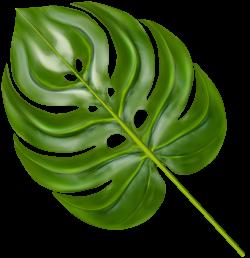 Palm Branch Decorative Transparent Image | Gallery Yopriceville ...
