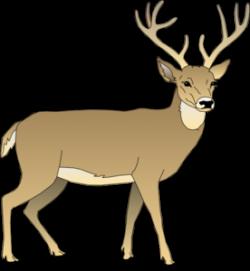 Male Deer Clip Art at Clker.com - vector clip art online, royalty ...