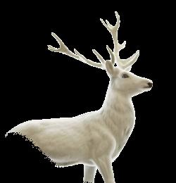 Deer PNG images