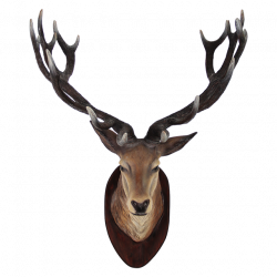Clipart PNG Deer #32764 - Free Icons and PNG Backgrounds