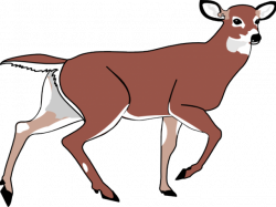 Deer Rug Cliparts Free Download Clip Art - carwad.net