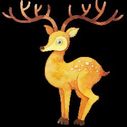 Watercolor painting Illustration - Watercolor deer 1280*1280 ...