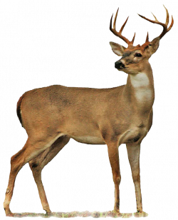 Hunting: Oklahoma Department of Wildlife Conservation | Art 7 ...