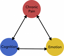 Assessing the Pain Triangle
