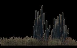 Desert Plants (4) by wolverine041269.deviantart.com on @DeviantArt ...