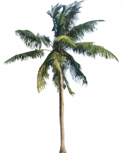 A Collection of tropical (and subtropical) plant images with ...