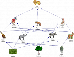 As most food webs go the savannah food web begins with a some ...