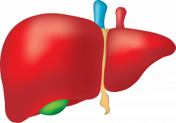 Global Non-Alcoholic Fatty Liver Disease (NAFLD) Market Outlook 2018 ...