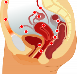 Endometriosis | Belgium| PDF | PPT| Case Reports | Symptoms | Treatment
