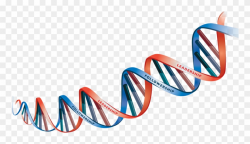 Dna Picture Free Clipart Hd - Dna Strand Transparent ...