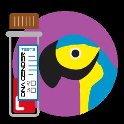 Sample collection Bird DNA - iQBirdTesting