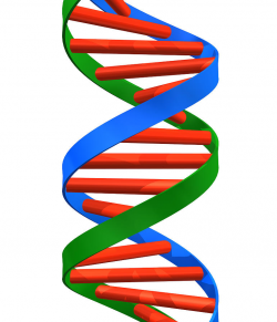 Dna Helix Clipart   Free download best Dna Helix Clipart on ...