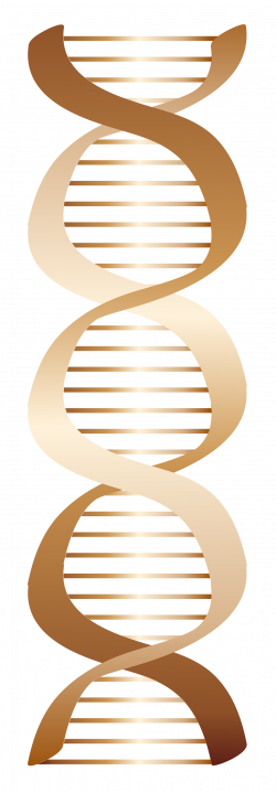 clipartist.net » Clip Art » Bronze Dna Icon Scalable Vector Graphics SVG