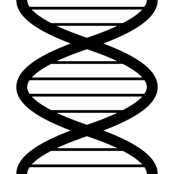 File:Plain DNA icon.svg - Wikimedia Commons