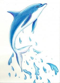 Pin by Birgit Keys on Clip Art Sealife in 2019 | Dolphin ...