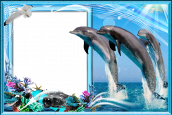 Berühmt Dolphin Picture Frames Zeitgenössisch - Bilderrahmen Ideen ...